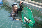 """Vụ cá chết ở Quảng Ngãi: Nghi cá bị """"sốc"""" do thay đổi môi trường đột ngột"""