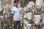 Lạng Giang - Bắc Giang: Trồng nấm công nghệ cao cho lãi lớn