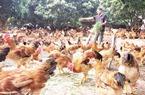 Tỷ phú trang trại hữu cơ vùng gò đồi