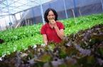 Choáng với trang trại trồng rau mỗi năm thu lãi 8 tỉ đồng/ha