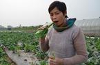 Trồng rau sạch, nông dân tự tin ăn rau giữa cánh đồng không cần rửa