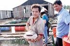 Thu tiền tỉ nhờ nuôi cá quý hiếm kết hợp làm du lịch