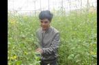 Trang trại rau hữu cơ từ vườn tới bàn ăn thành công ở Lâm Đồng