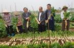 Doanh nghiệp Việt – Hàn bắt tay xây nhà máy chế biến củ cải xuất khẩu