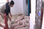 Khách sạn cao tầng phục vụ chăn nuôi lợn lớn nhất thế giới ở Trung Quốc