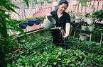 """Cô giáo Hà Nội mách cách làm """"nước thần"""" diệt sâu bọ, đuổi muỗi, lau nhà cực tốt"""