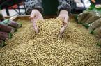 Bất ngờ miễn thuế 10 triệu tấn đậu nành nhập từ Mỹ, chính quyền Tập Cận Bình đang thỏa hiệp?