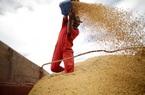 Lo sợ làn sóng dịch Covid-19 thứ hai, Bắc Kinh chỉ thị tăng nhập nông sản Mỹ