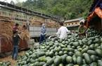 Nhiều doanh nghiệp nông sản vẫn chủ quan với quy định nhập khẩu của Trung Quốc