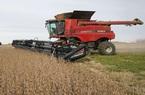 Mong đạt thỏa thuận thương mại, Trung Quốc đẩy mạnh nhập khẩu đậu tương Mỹ