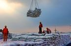 Trung Quốc đẩy mạnh nhập khẩu đậu nành Mỹ sau tuyên bố miễn giảm thuế