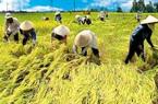Gia nhập EVFTA: Nông dân phải là doanh nghiệp