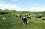 Đưa Sơn La trở thành trung tâm của ngành sữa