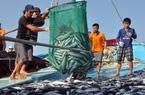 Cần chế tài mạnh chặn khai thác hải sản bất hợp pháp