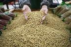 """Trung Quốc dọa ngừng nhập nông sản nếu Mỹ tiếp tục """"lật lọng"""" trên bàn đàm phán"""