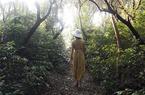 Tản bộ trong rừng trâm quý giữa trùng khơi