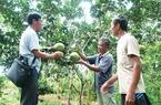 Quỹ Hội giúp người trồng bưởi Múc thoát nghèo