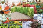 Xuất khẩu nông, lâm, thủy sản 8 tháng đầu năm tăng nhẹ