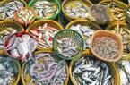 Thẻ vàng IUU khiến xuất khẩu hải sản sang châu Âu tụt hạng