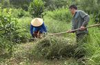 Lạng Sơn: Hỗ trợ sản xuất, xây dựng mô hình phát triển cây dược liệu