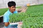 Vườm ươm hữu cơ tiền tỷ của nông dân xứ rau