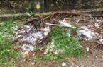 Nông nghiệp miền Bắc bị ảnh hưởng nặng nề vì mưa đá