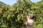 Xây dựng nhà máy chế biến rau quả, niềm vui nhân đôi