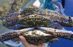 Xuất khẩu cua ghẹ thu sang Trung Quốc về hơn 107 triệu USD