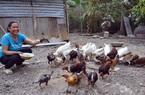 """Kiên Giang: Một bà nông dân """"2 vai 2 gánh"""" mà mỗi năm nuôi gà, bắt cá tôm thu vài trăm triệu đồng"""
