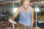 Trồng la liệt thứ nấm đặc sản, ăn sần sật, ngọt như mì chính, ông nông dân tỉnh Thái Nguyên lãi 60 triệu/tháng