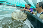 Nuôi tôm siêu thâm canh thích nghi biến đổi khí hậu