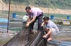 Hòa Bình: Tận dụng lợi thế phát triển nghề nuôi cá lồng
