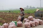 Đột phá trong xây dựng NTM Thái Bình - Kỳ cuối: Nụ cười hạnh phúc ngày mới