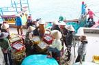 Bình Định: Loài cá này xuất hiện dày đặc, dân tất bật đánh bắt, cả làng trúng đậm