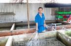 Sóc Trăng: Ông nông dân tỷ phú nuôi lươn không bùn theo cách này, bắt bán 3 tấn toàn con to, lời 500 triệu