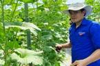 Bình Định: Vì sao trồng dưa lưới công nghệ cao mà ông nông dân có bằng đại học này vẫn phải thả ong vào vườn?