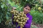 Thứ Trưởng Bộ NNPTNT: Sơn La là một điển hình về trồng cây ăn quả