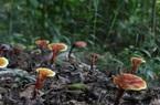 """Ngắm các loại """"ngọc quý"""" mọc nhan nhản giữa rừng"""