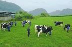 Vì sao Sữa Mộc Châu bị phạt hơn nửa tỷ đồng?
