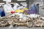Thủy sản Minh Phú sẽ kháng cáo khi bị Mỹ áp thuế như tôm Ấn Độ