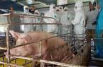 Phê duyệt Chương trình quốc gia phòng, chống bệnh lở mồm long móng
