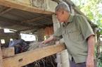 Lạng Sơn: Sắp có các mô hình chăn nuôi, trồng trọt giúp dân làm giàu