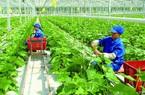 """Doanh nghiệp mong tháo """"nút thắt"""" về vốn để làm nông nghiệp công nghệ cao"""