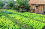 Thủ tục chuyển từ đất vườn sang đất ở năm 2020