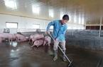 324 xã đang có dịch tả lợn châu Phi, Bộ NNPTNT yêu cầu tập trung chống dịch