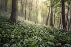 10 bức ảnh đẹp mê ly về phong cảnh nước Anh