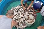 """Đà Nẵng: Ngư dân chua xót """"chạy bão"""""""