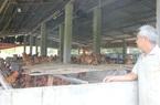 Đồng Nai: Bán 8.000 con gà ta, lỗ cả nửa tỷ, nông dân ở đây không dám tái đàn vụ Tết