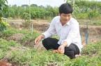 Trai Đồng Tháp 12 năm trồng thứ sâm cây thấp tè, hoa rực rỡ, lời hơn 1 tỷ mỗi năm, vườn đông khách tới xem