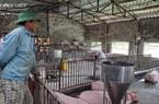 Giá heo hơi tăng nhanh cả 3 miền, chuyên gia dự báo gì về giá thịt lợn sắp tới?